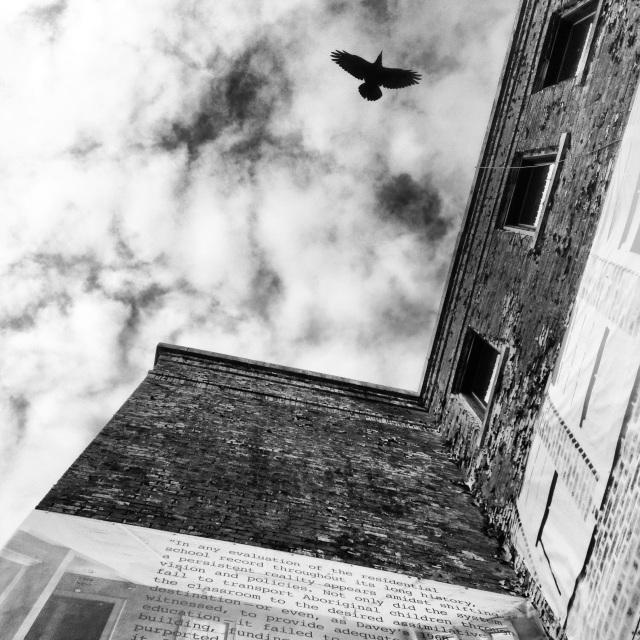 Raven flying over St. Michael's Residential School.