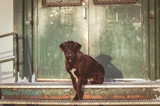 straydog.logo_WEB