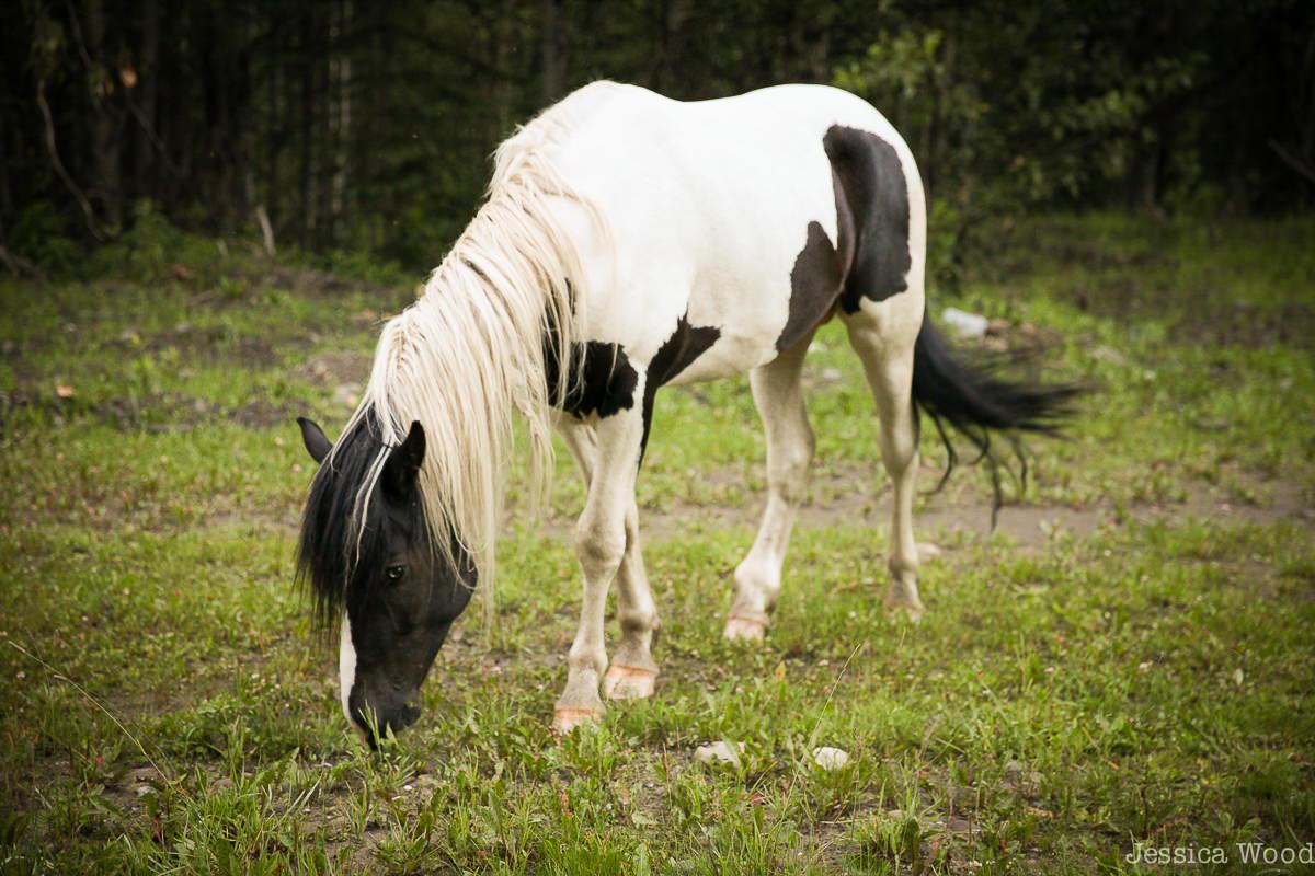 Wild Horse, Moberly, BC