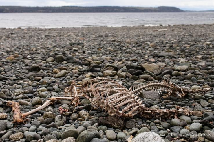 A dear carcass.