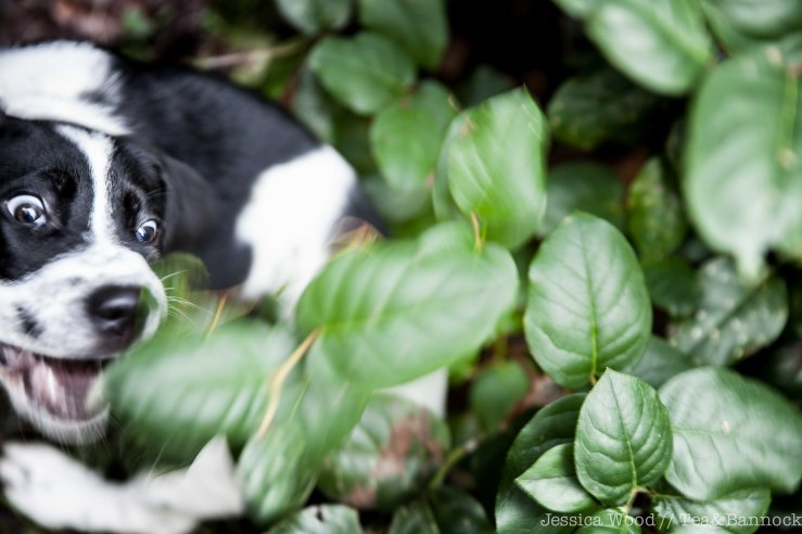 Smudge-Eats-Salal-by-Jessica-Wood
