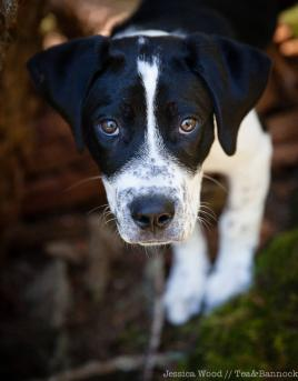 Smudge-the-Pup-by-Jessica-Wood