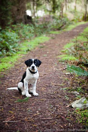 Smudge-wants-to-run-by-Jessica-Wood