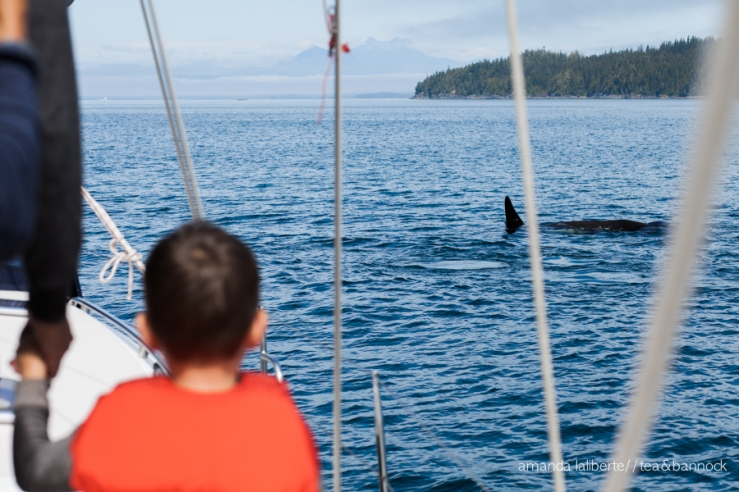 The afternoon when we saw a pod of killer whales.