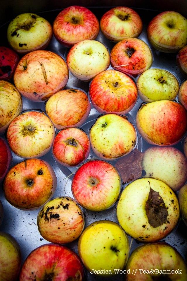 jessica-wood-apple-juice-press-tea-bannock-1