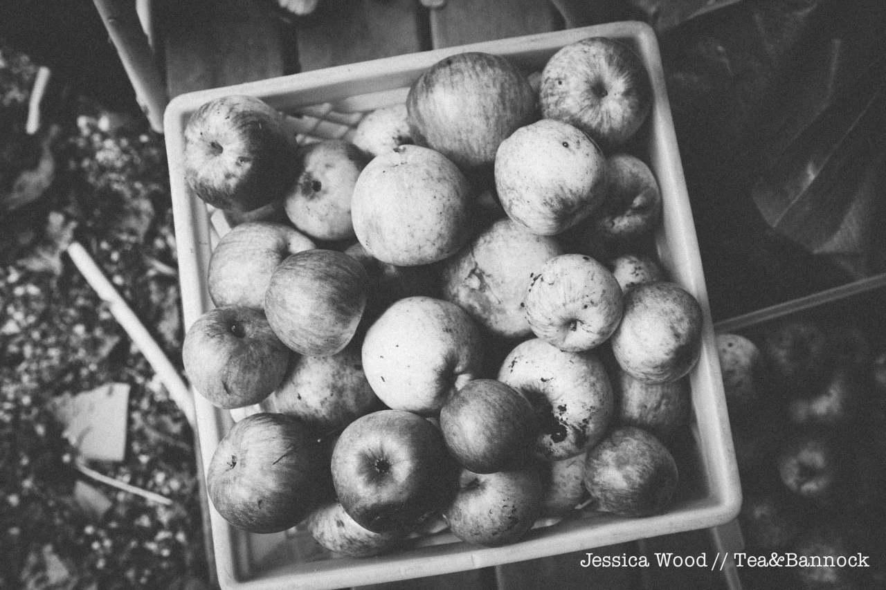 jessica-wood-apple-juice-press-tea-bannock-10