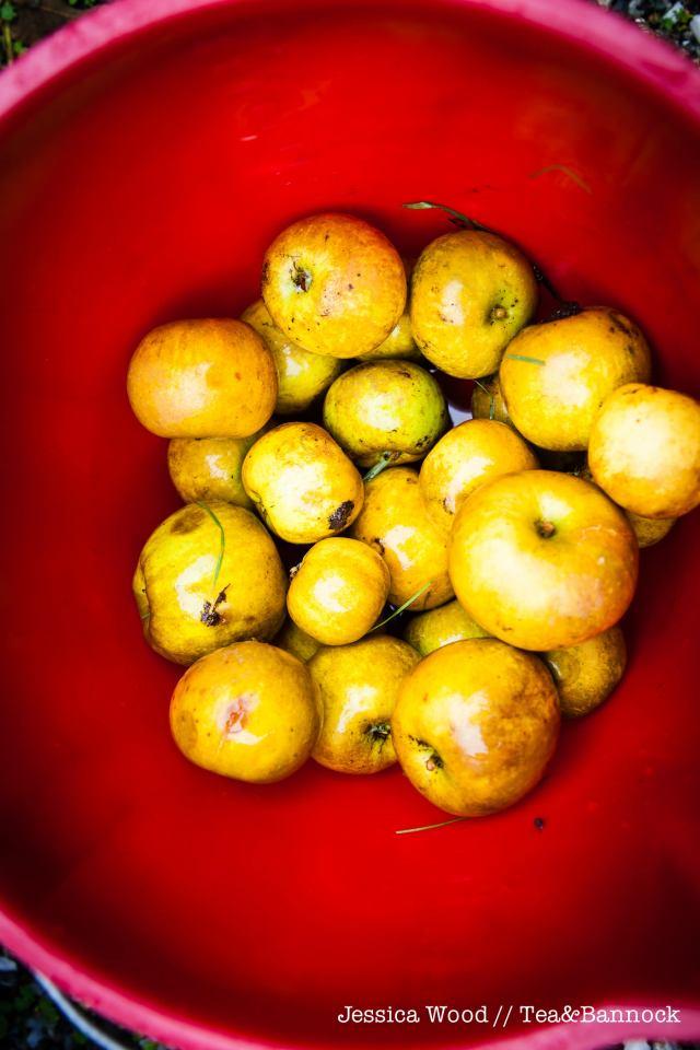 jessica-wood-apple-juice-press-tea-bannock-3