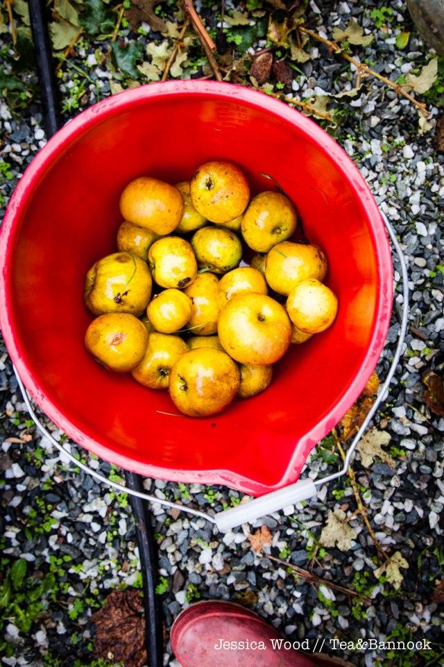 jessica-wood-apple-juice-press-tea-bannock-4